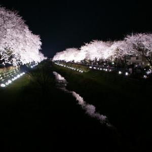 闇夜に浮かびあがる桜☆野川の桜