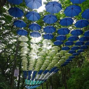 傘の花が涼しさを演出
