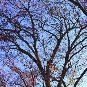12月の井の頭公園と恵比寿
