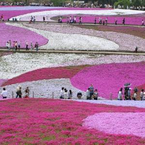 芝桜の丘☆過去画像