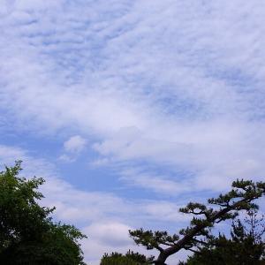 6月の空とコスモス