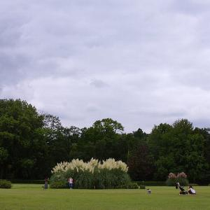 神代植物公園☆パンパスグラス