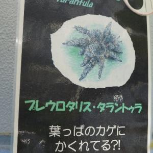 面白いランの花☆神代植物公園