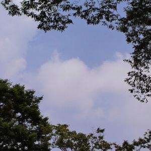 昨日の空☆昭和記念公園とランチ