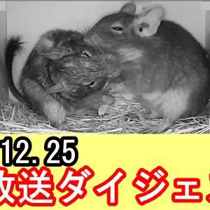 朝も寝るまで大忙し!! ライブ放送ダイジェスト動画。。