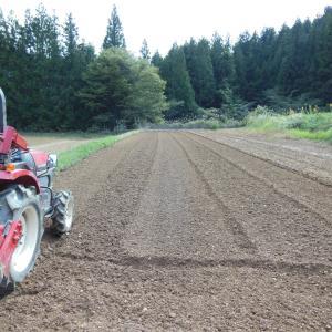 にんにく畑、畝立て