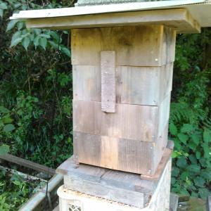 西洋ミツバチ、引っ越し