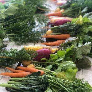 滋賀県産野菜ってご存知ですか?滋賀草津パン教室。