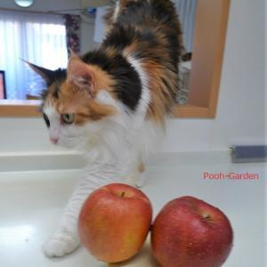 リンゴの皮付きフィリング♪