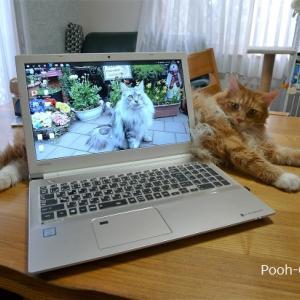 増えたw猫と紫陽花♪