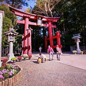 小春日和な日に空きを堪能… (弥彦神社)