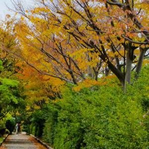 紅葉進む我が散歩道…