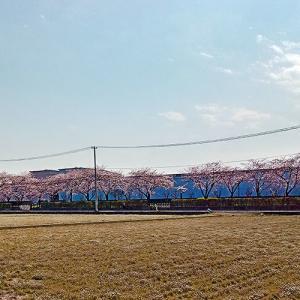 花盛りの季節到来…