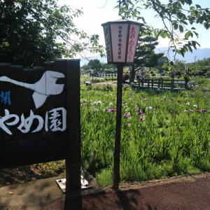 瓢湖のあやめ園に行ってきました (阿賀野市水原・瓢湖〃畔)