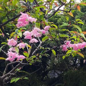 「花街道」の花が咲きました…