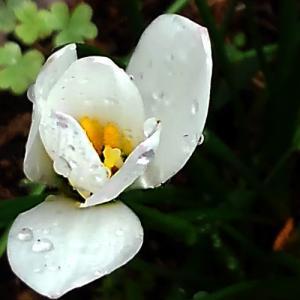 秋雨が降り続く日に想う事…
