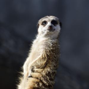 盛岡市動物公園の動物たちは寒そうでした。