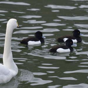 高松の池にはいろんな鳥がいました。