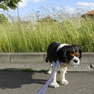 マーチと散歩~久しぶりに公園に行きました。