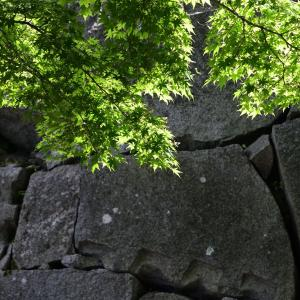 緑豊かな盛岡城跡公園です。