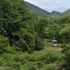 御所湖広域公園の植物園でトンボが飛んでました。