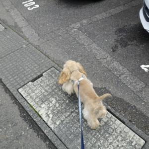 ジュリオとちょっとだけ散歩。