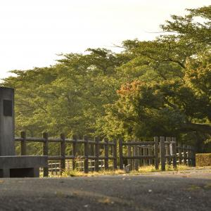 朝早く高松の池に行きました。