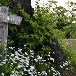 早朝の高松の池を歩きました。