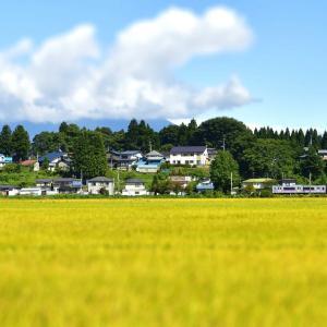 黄金色の田園走る秋田新幹線こまちです。