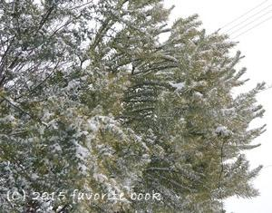 『きらきら』 雪が積もると