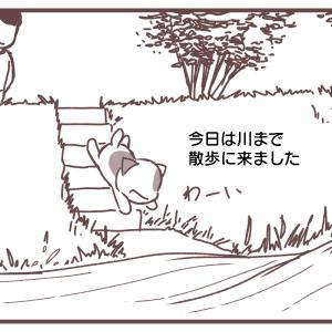 雀の水浴び場