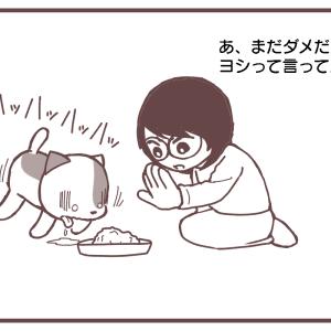 食べてもいいよ