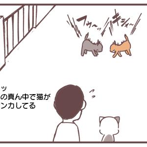 猫のケンカに参戦?