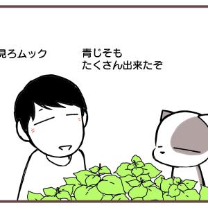 天ぷらかな?