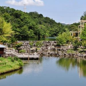 けいはんな記念公園の夏景色!・・・水景 濃緑 生き物