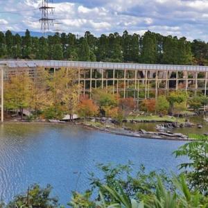 「けいはんな記念公園」の秋景色ー1!・・・紅葉始まり 棚田