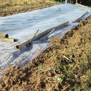 この暑さを役立たせたい・・栽培土の灼熱処理