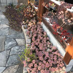 多肉花壇の今の様子