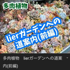 lierガーデンへの道案内(前編)