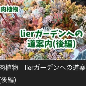 lierガーデンへの道案内(後編)