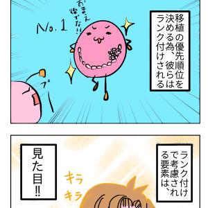 【4コマ】胚盤胞のランク付け