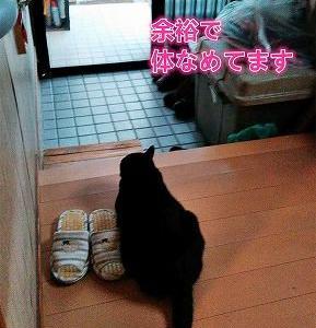 そっくり猫、また現れる