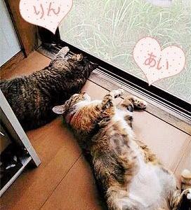 暑い日のお昼寝