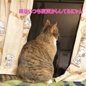 お気楽猫にゃん
