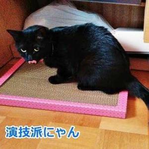 猫に変えられた王子様