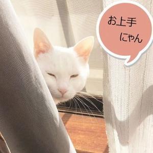 猫でアンチエイジング