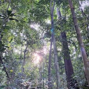 国民の大ブーイングで、電気代どうなる?と、森物語。