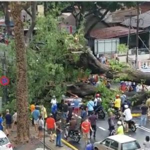 いつどこで起こるか分からない死:倒木に要注意のマレーシア生活。