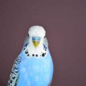 セキセイインコと暮らしはじめるなら、小鳥が診れる動物病院をチェックしておこう。