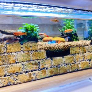 ★DIY★百均で発泡スチロールのミニレンガ飾り作る(水槽アクセサリー)